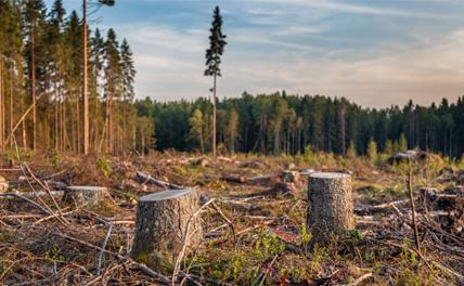 Правительство увеличит порог вложений в приоритетные лесные проекты